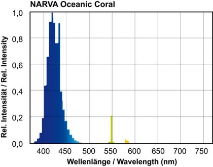 T8 NARVA OCEANIC BLUE/CORAL