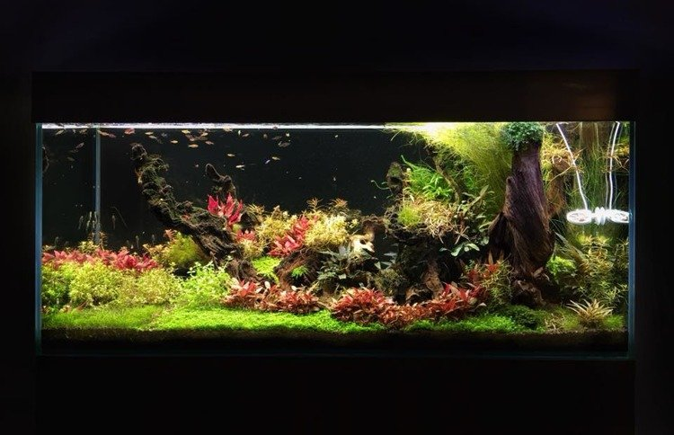 Lampa Led Premium Whitered Akwarium Roślinne Oświetlenie